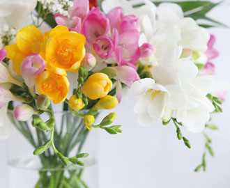 Blumen für Zuhause