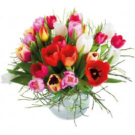 Tulpen pur